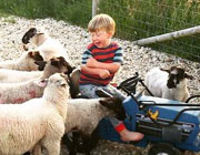Fun for children at Dewflock farm